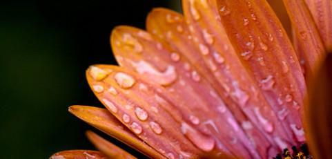 Come l'ho scattata – Macro di un fiore