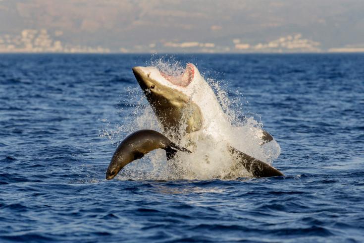 time - shark